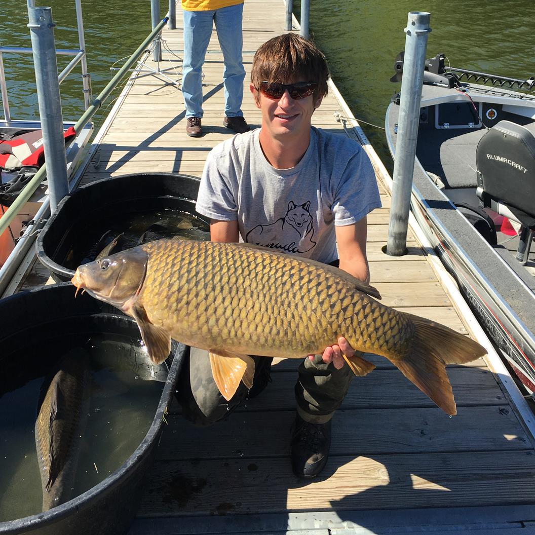 50lb Common Carp found in Cedar Lake